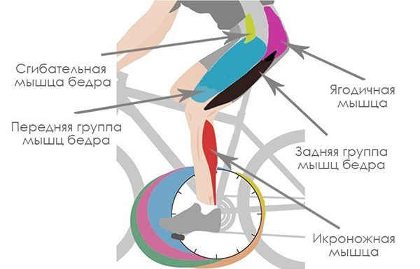 Работа Мышц ног на велотренажере